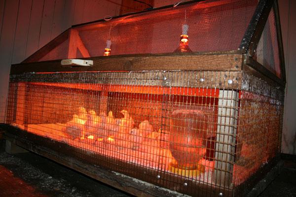 Клетки для цыплят кур